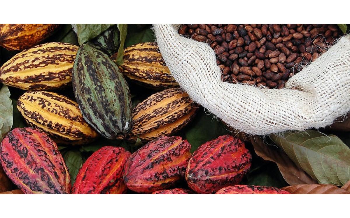 Не только вкусно, но и полезно - масло Какао!